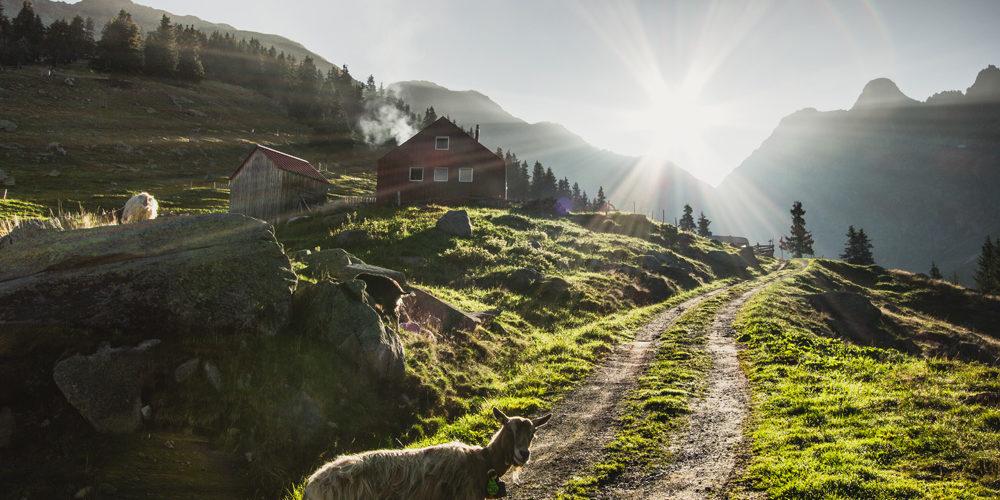 Val Medel Alp Puzzetta Ziege